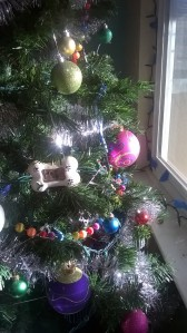 Rev Darcy's Christmas Tree in the Sunlight