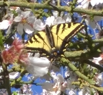 Look at this butterfly I chased down in the orchard!