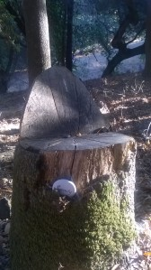 At the UU Ministers Fall Meeting last weekend, I passed by this tree stump.